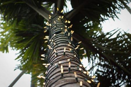 exterior holiday decorating, florida holiday decorating